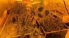 В Петербурге полиция изъяла партию растительных наркотиков