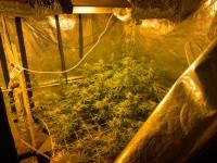 Пресечение незаконного оборота наркотических средств